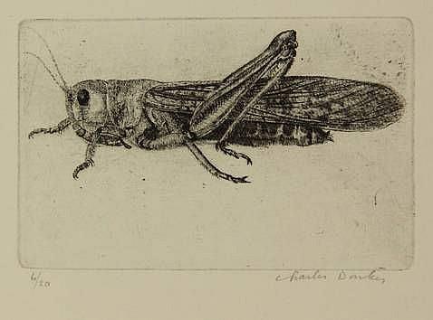 Donker, K.C.M. (b.1940). Sprinkhaan. Etching,