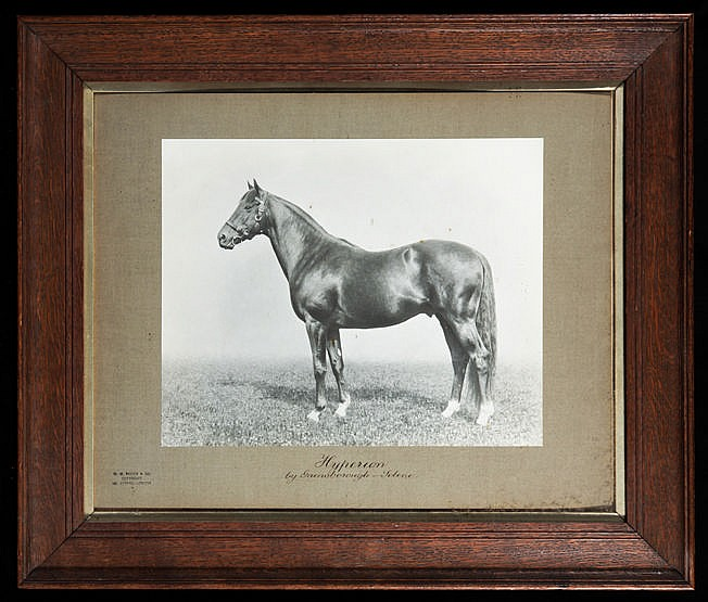 A photographic portrait of Lord Derby's Hyperion,  by W.A. Rouch & Co.