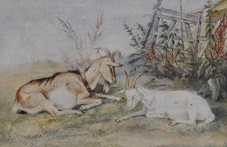 James E Bourhill Pair of watercolours, goat