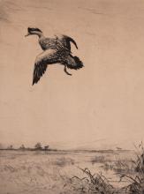 Roland Clark - Duck Coming In