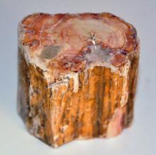 Petrified wood specimen mineralized