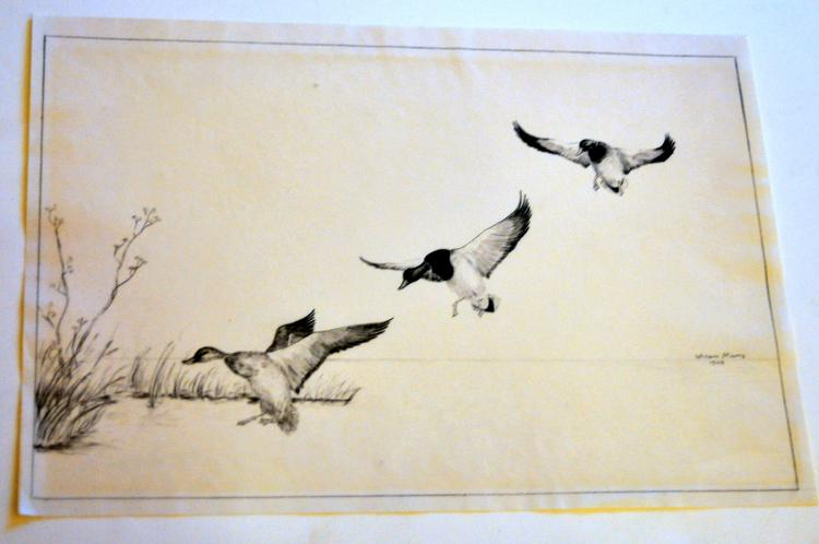 Ducks Willem Manis 1906 drawing