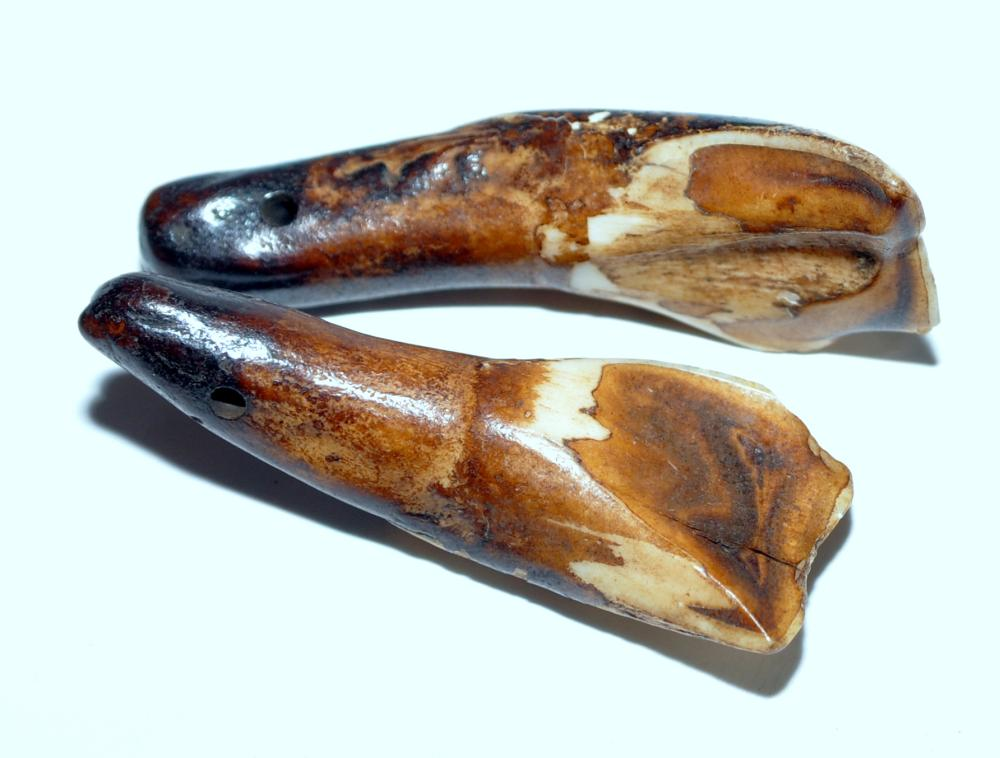 Lot 5: Pre historic buffalo teeth