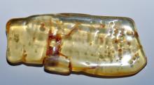 Lot 170: Amber polished freeform specimen