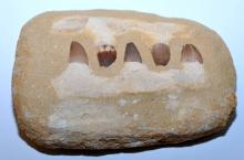 Lot 232: Mososaur dinosaur jaw- upper