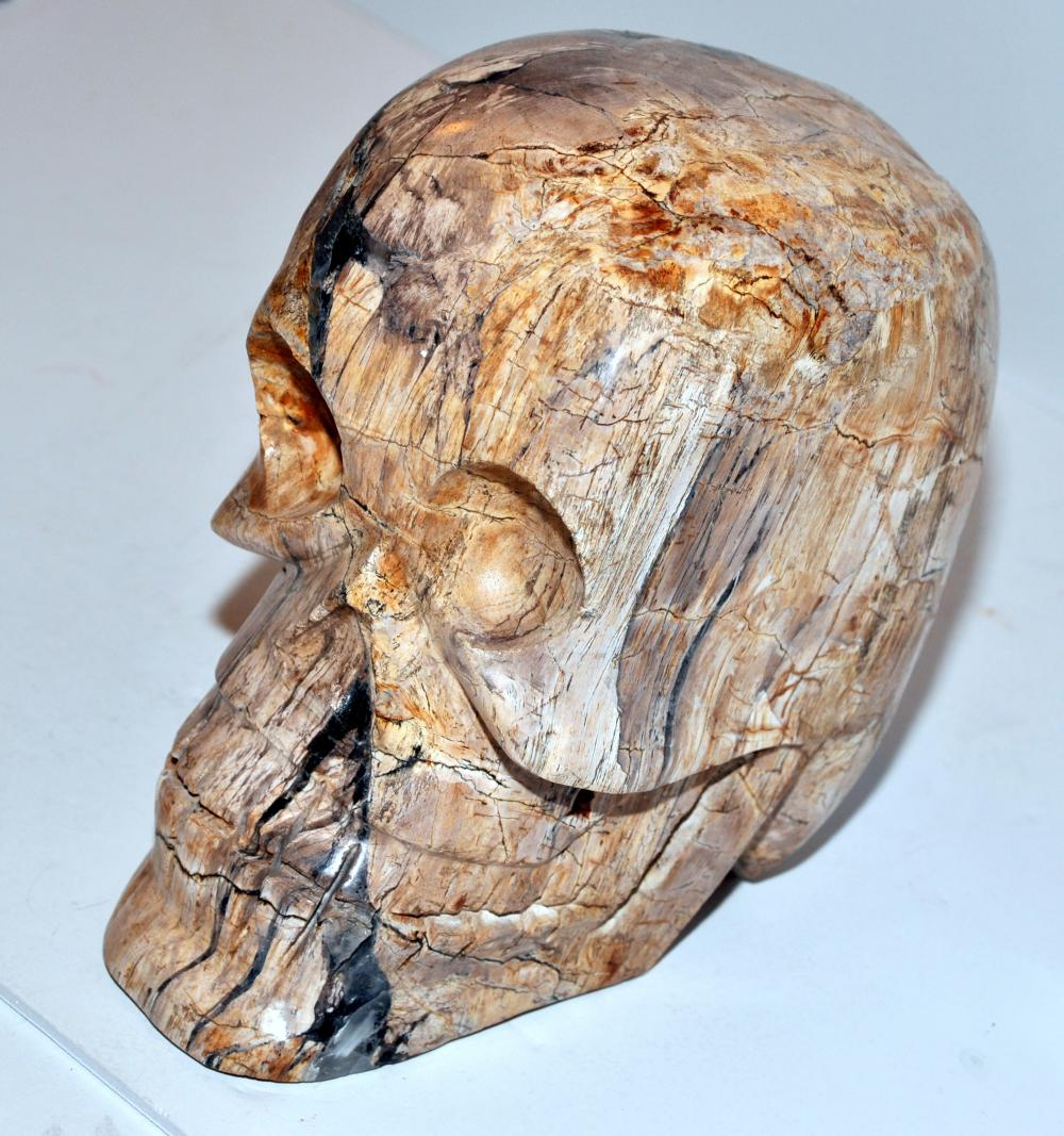 Petrified wood skull life size