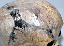 Lot 287: Petrified wood skull life size