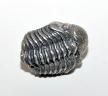 Lot 294: Trilobite sterling stick pin/tie tac