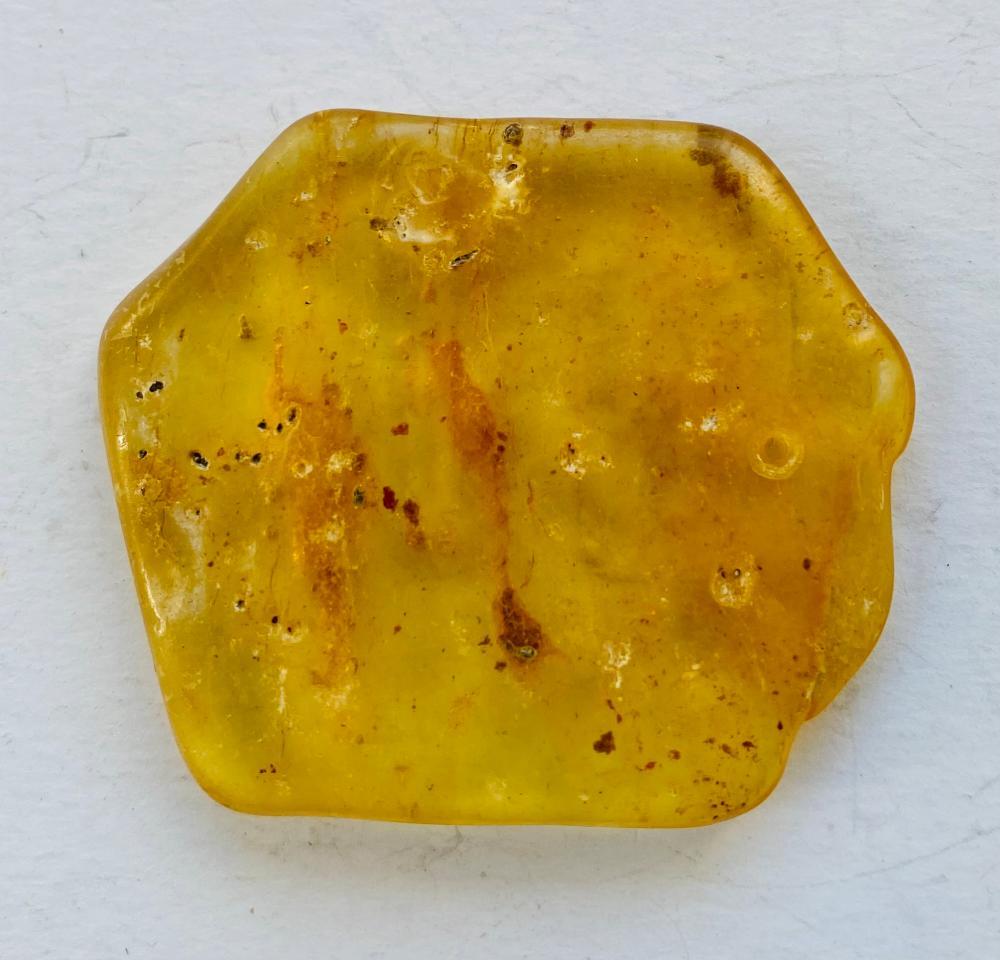Amber copal specimen polished