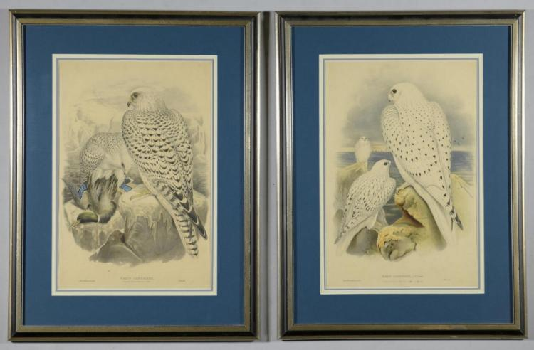 Pr Falcon Lithographs w/ Book