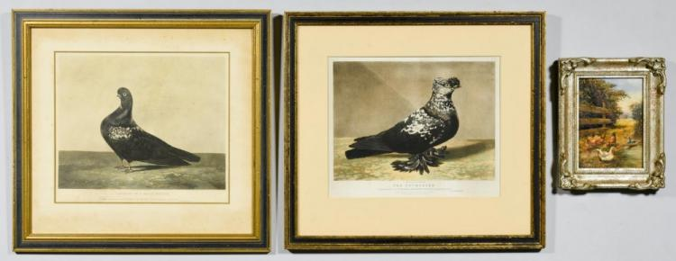 Pigeon Portrait Prints & Chicken Painting