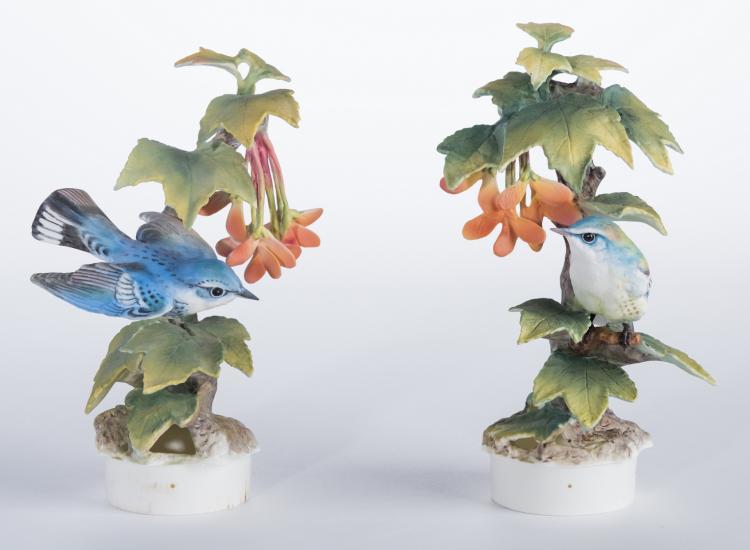 Pair Dorothy Doughty Cerulean Warblers