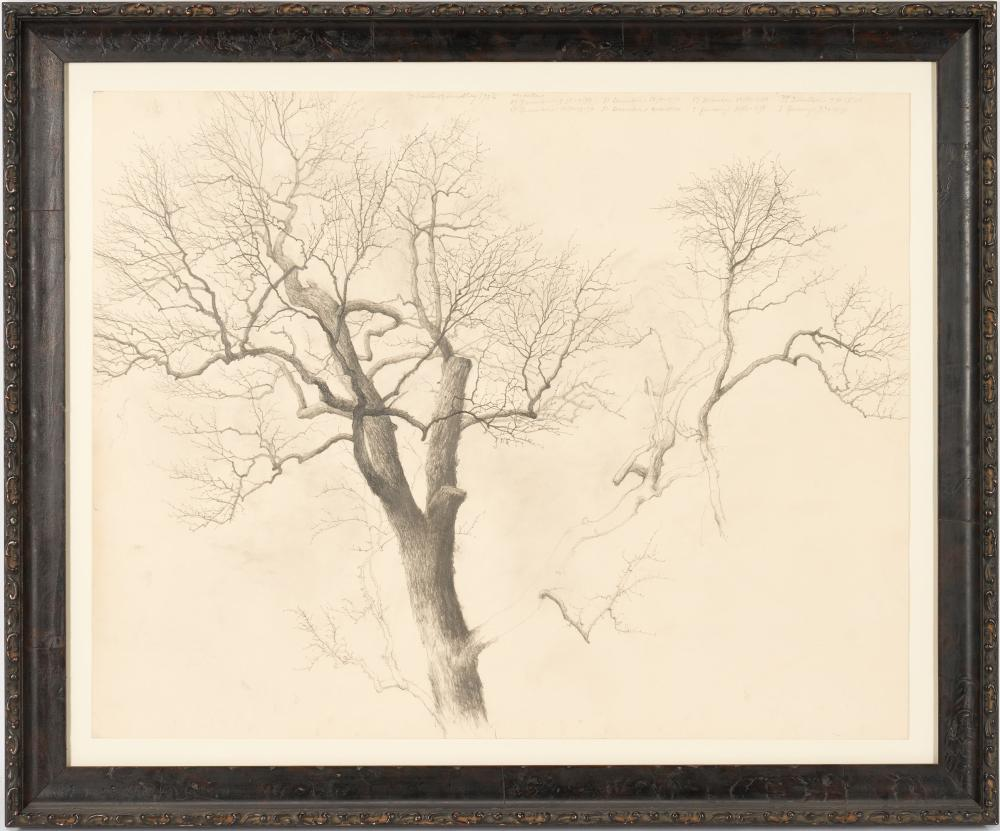 Charles Brindley Graphite Drawing, Study of a Tree