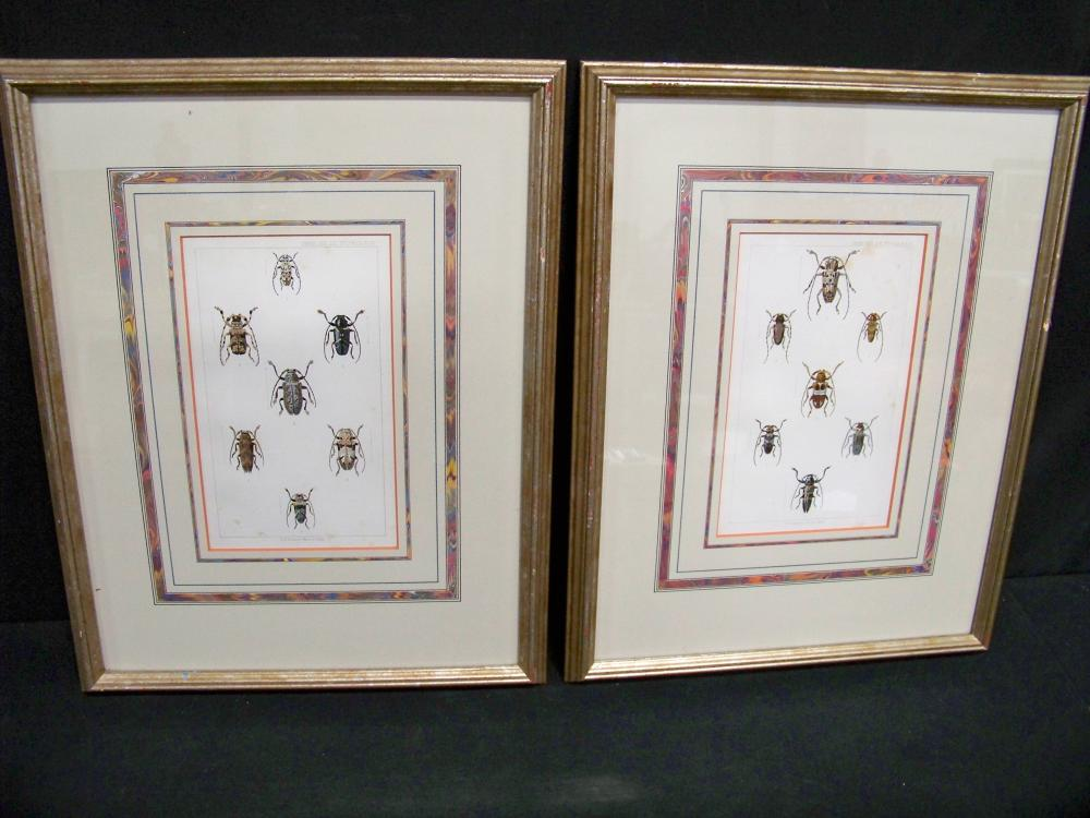 Pair of Antique Framed English Insect Prints
