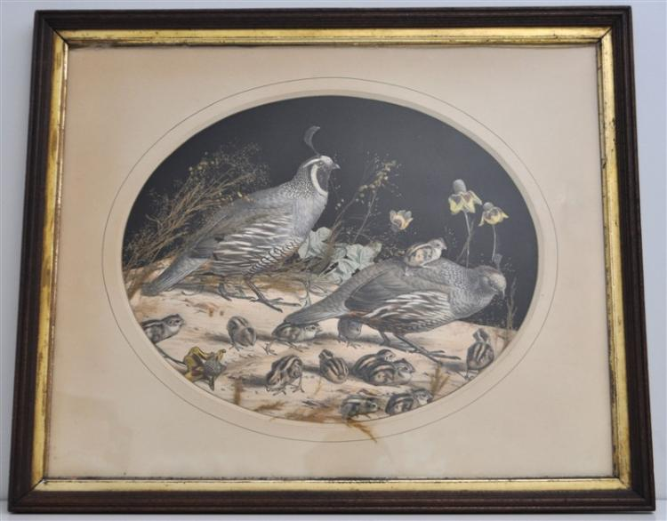 EDOUARD TRAVIES 19TH C. CALIFORNIA QUAIL