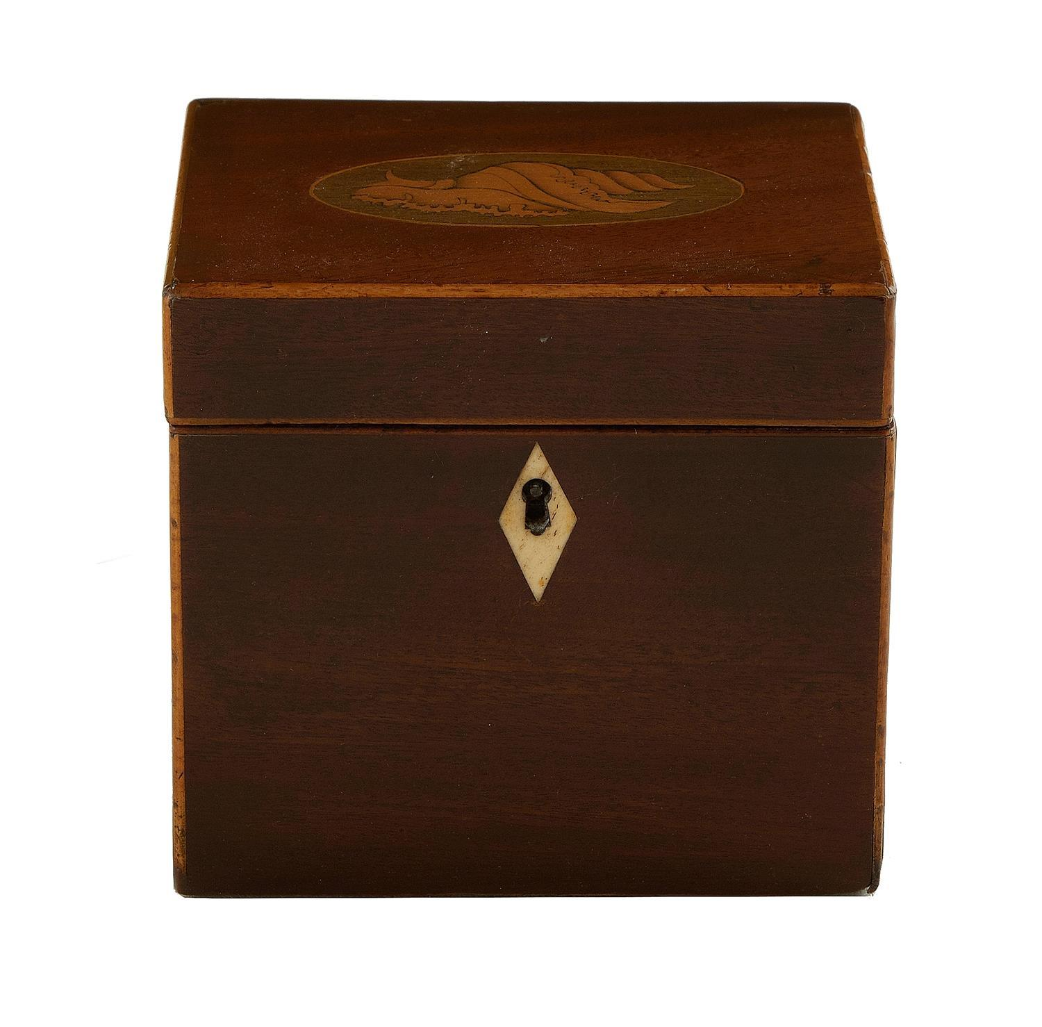 Georgian conch-shell inlaid and stained tea caddy