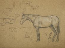 ESTELLA LOUISA MICHAELA CANZIANI (ENGLISH 1887-1964) ARR  A Sheet of Studies including a Horse, Cow, and Greyhounds  Charcoal heightened with white chalk on dark buff paper  57.5 74cm (23 x 29in)  Unframed