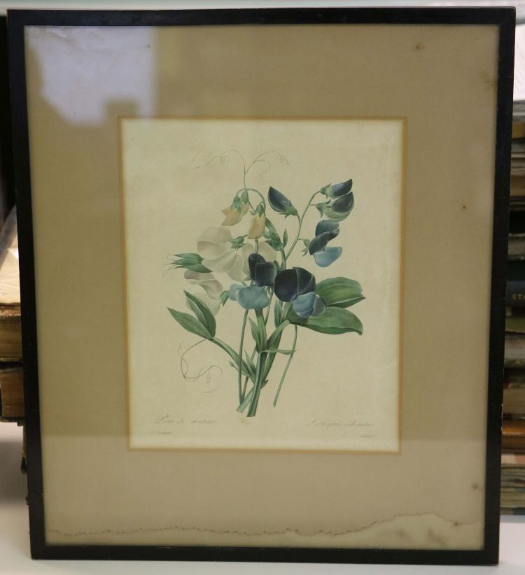 BOTANY/ORNITHOLOGY - A collection of 18th/early 19th century plates, framed and glazed, including Redoute's Pois de Senteur and Tulipe de Gesner. (11)