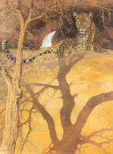 Kim Donaldson (Zimbabwean, born 1952)/Leopard at Rest/signed/oil on canvas, 102cm x 76.5cm/