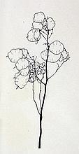 Alexander Olbricht. Sechs Pflanzenzeichnungen.