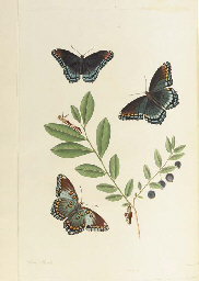 ABBOT, John (1751-1839) and Sir James Edward SMITH (1759-1828). The Natural History of the Rarer Lepidopterous Insects of Georgia, London: T. Bensley for J. Edwards, Cadell and Davies, and J. White, 1797.