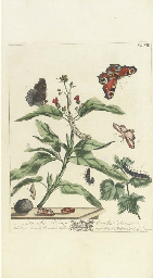 HARRIS, Moses (1730-c.1788). The Aurelian: or Natural History of English Insects; namely, Moths and Butterflies. London: for the author, 1766.