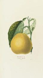 RISSO, Joseph Antoine (1777-1845) and Pierre Antoine POITEAU (1766-1854). Histoire naturelle des Orangers. Paris: Imprimerie de Mme. H'rrisant le Doux, 1818-[1820].