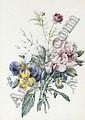 Pierre-Joseph Redout' (Saint-Hubert 1759-1840 Paris), Pierre Joseph Redoute, Click for value