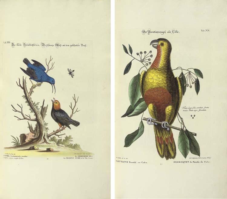 SELIGMANN, Johann Michael (1720-1762). <I>Verzameling van Uitlandsche en Zeldzaame Vogelen...in't</I>