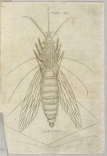 REDI, Francesco (1626-1697/98).  Esperienze intorno alla generazione degli' insetti... scitte in una lettera all' illustrissimo signor Carlo Dati.  Florence: All' Insegna della Stella, 1668.