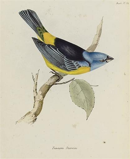 DARWIN, Charles, editor. The Zoology of the Voyage of the Beagle, under the Command of Captain Robert FitzRoy, R.N., during the Years 1832 to 1836. London: Smith, Elder, 1840-October 1843.