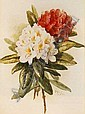 PAUL DE LONGPRE (1855-1911) Rhododendron, Paul De Longpre, Click for value