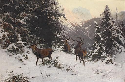 Falscher wind: Hirsche im winter
