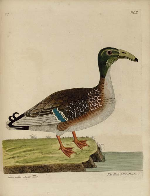 ALBIN, Eleazar (d.1741/2). <I>A Natural History of Birds</I>. London: printed for W.Innys and