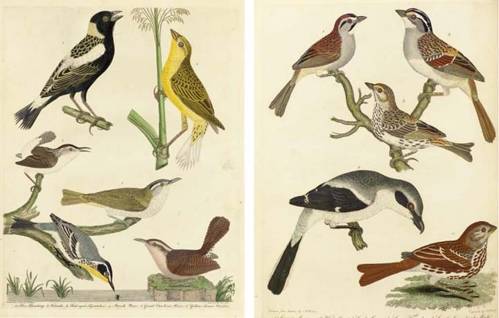 WILSON, Alexander (1766-1813) and George ORD (1781-1866). <I>American Ornithology; or, the</I>