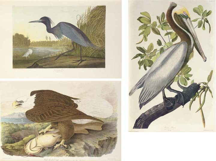 AUDUBON, John James (1785-1851). The Birds of America, from Original Drawings by John James