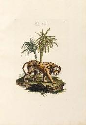 Johann Daniell Meyer (illustrator, 1713-1752)