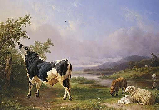 Boeufs et moutons au pâturage