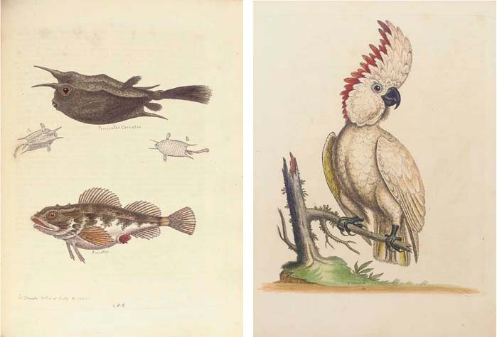 EDWARDS, George (1694-1773). <I>A Natural History of Uncommon Birds, and of Some Other Rare and</I>