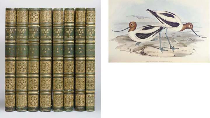 GOULD, John (1804-1881). <I>The Birds of Australia</I>. London: Richard and John E. Taylor for