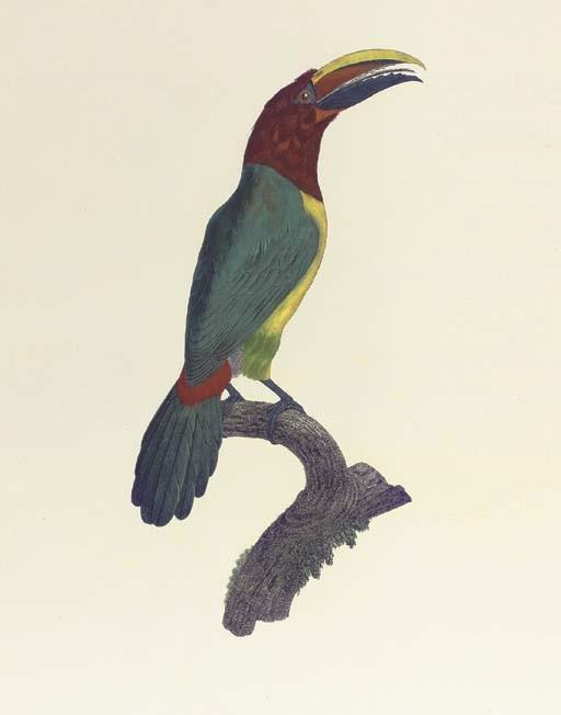 LEVAILLANT, François (1753-1824). <I>Histoire naturelle des oiseaux de paradis et des rolliers</I>