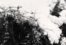 LU HUI (B. 1977) - Deep Snow 19-2