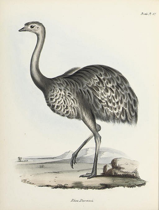 DARWIN, Charles (1809-1882, editor). The Zoology of the Voyage of the Beagle, under the Command of Captain Robert FitzRoy, R.N., during the Years 1832 to 1836 . London: Smith, Elder, February 1838-October 1843. 5 parts in 3 volumes, 4° (311 x