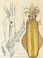 Aloys Zötl (1803-1887), Alois Zötl, Click for value