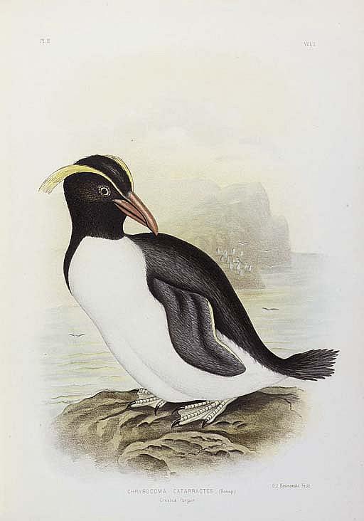 BROINOWSKI, Gracius Joseph (1837-1913).  The Birds of Australia . Melbourne, Sydney, Adelaide, Brisbane, New Zealand and Tasmania: S.T. Leigh & Co. for Charles Stuart & Co., [?1887]-1890-1891.