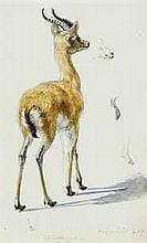 Henry Wallis, R.W.S. (1830-1916)   Study of a fawn (illustrated); and A study of female heads