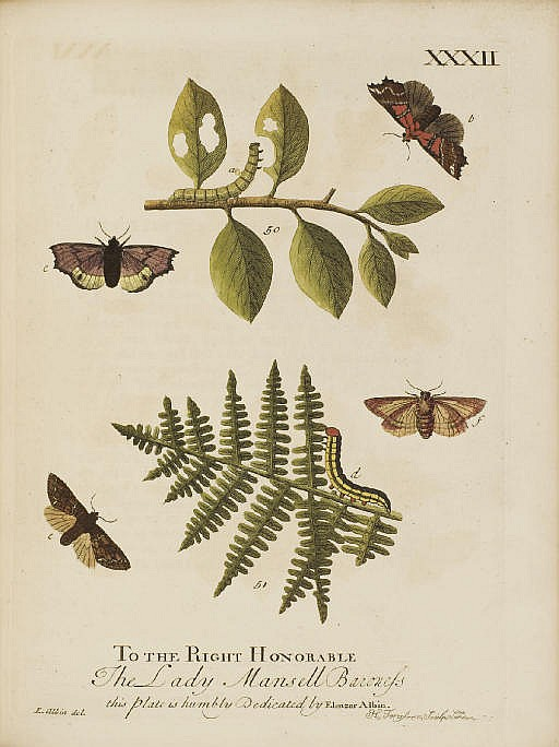 ALBIN, Eleazar (fl. 1713-59).  A Natural History of English Insects . London: for the Author and sold by William and John Innys, 1720.