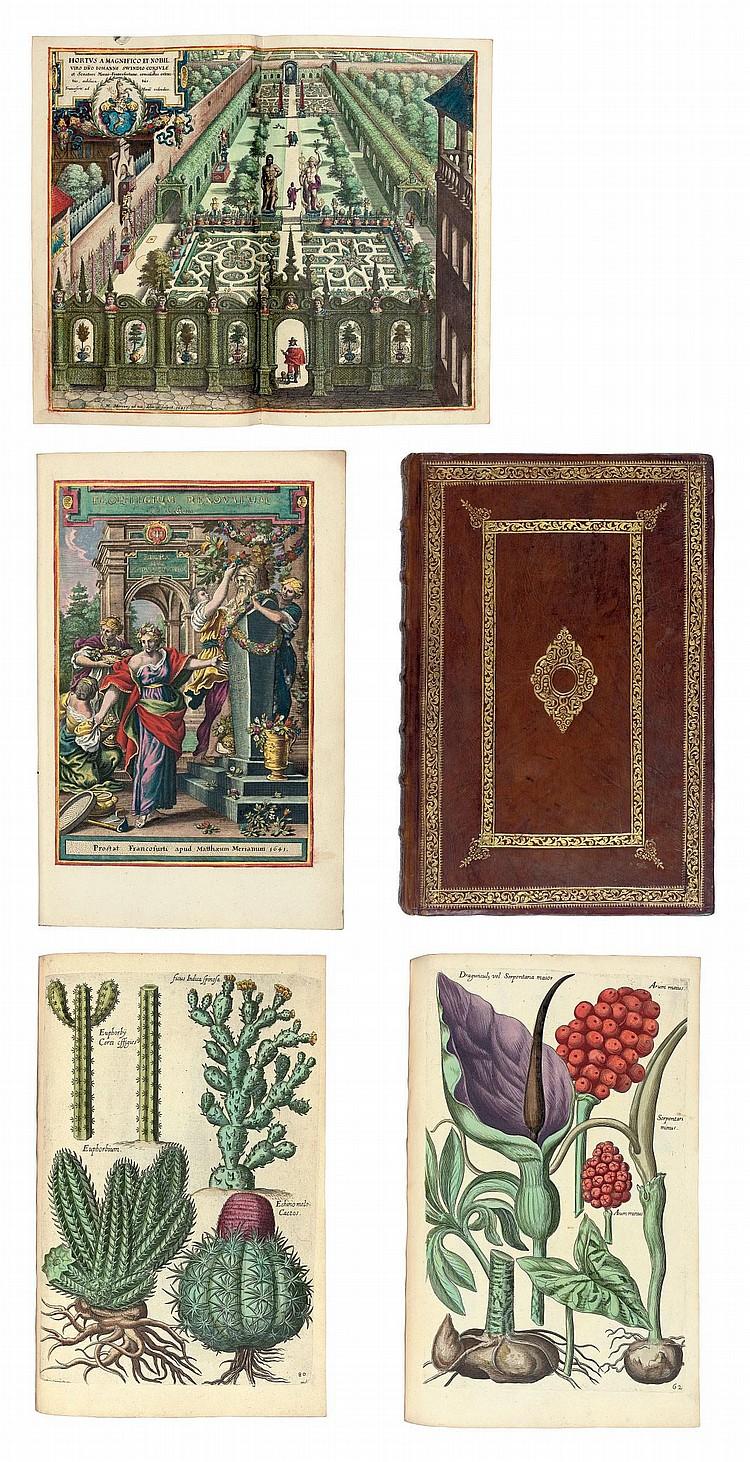BRY, Johann Theodor de (1561-1623).  Florilegium renovatum et auctum: variorum maximeque rariorum germinum, forum ac plantarum . Frankfurt, M. Merian, 1641.