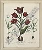 Basilius Besler (1561-1629) , Basilius Besler, Click for value
