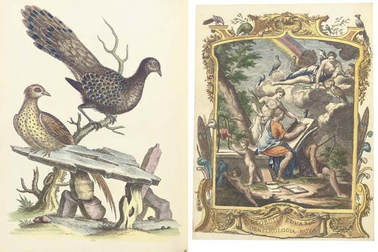 EDWARDS, George (1694-1773). <I>A Natural History of Uncommon Birds and of some other Rare and</I>